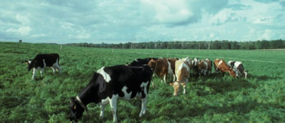 grazing-feature-image